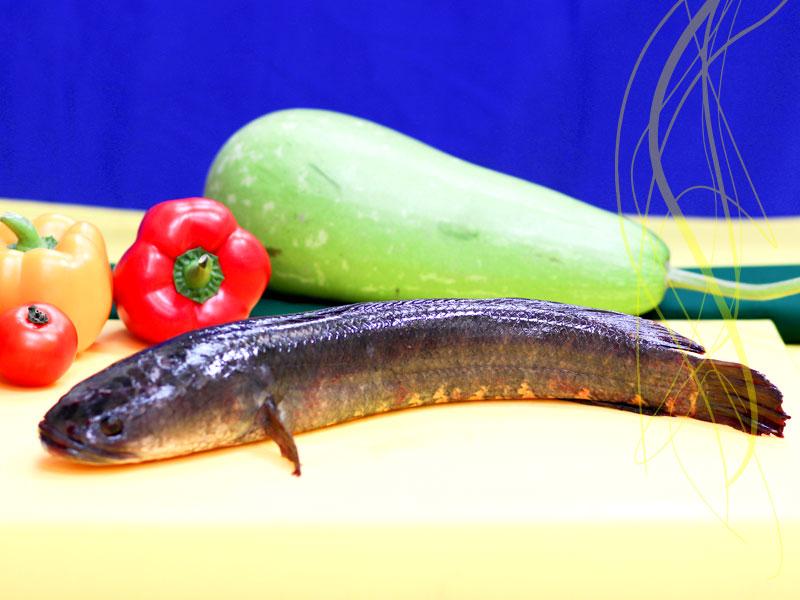 Deshi Shol Fish Whole (700-850gm size)