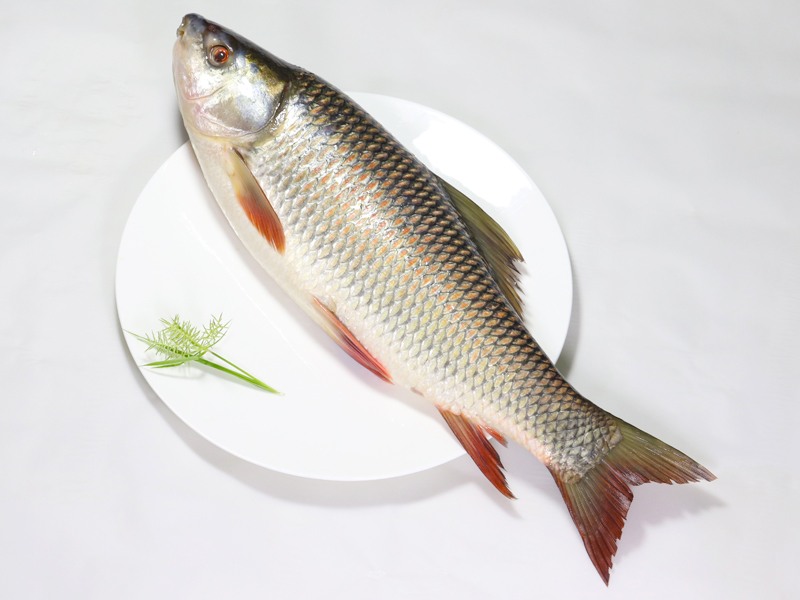Deshi Rui Fish/Rohu(2Kg To 6Kg Size) রাজশাহীর দেশী রুই মাছ