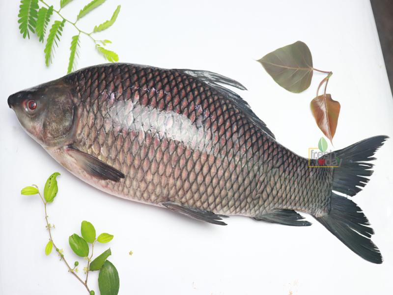 Deshi Kalibaush fish (দেশী কালিবাউশ মাছ)