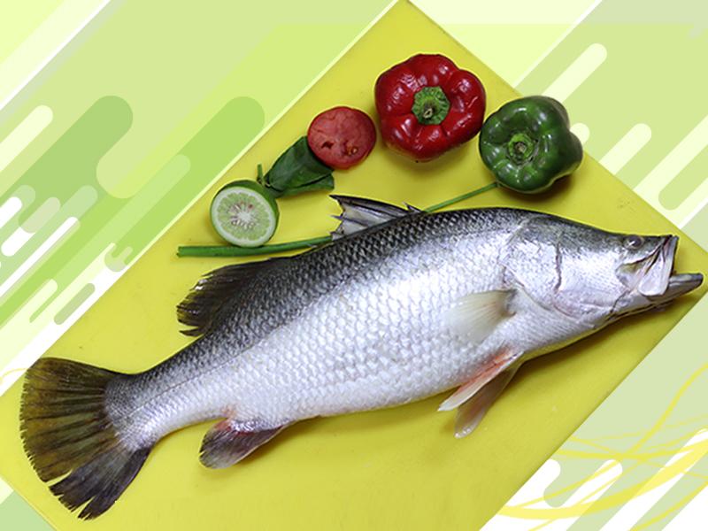 Bhetki Fish Whole (4-6 kg size)