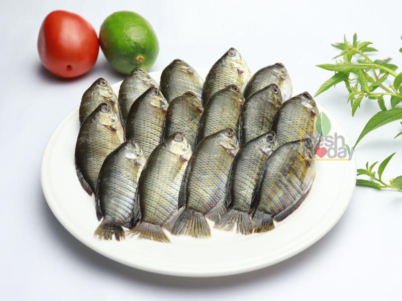 Deshi Koilsa Fish