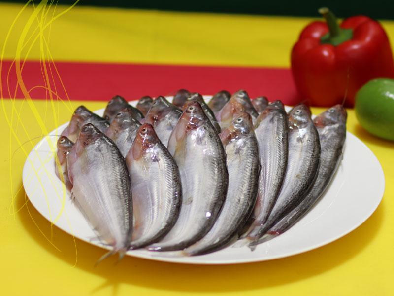 River Pabda Fish (নদীর পাবদা মাছ)